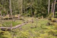 Queen Charlotte Islands Photos, Spirit Lake, Haida Gwaii, British Columbia, Canada CM11-08