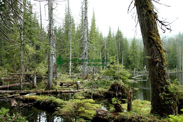 Queen Charlotte Islands Photos, Spirit Lake, Haida Gwaii, British Columbia, Canada CM11-06