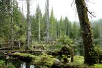 Queen Charlotte Islands Photos, Spirit Lake, Haida Gwaii, British Columbia, Canada CM11-06