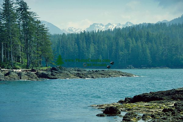 Rennell Sound, Queen Charlotte Islands, Haida Gwaii, British Columbia, Canada CM11-01