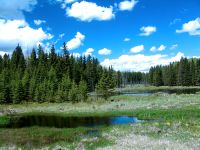 Boreal Forest, Riding Mountain National Park, Manitoba, Canada 03