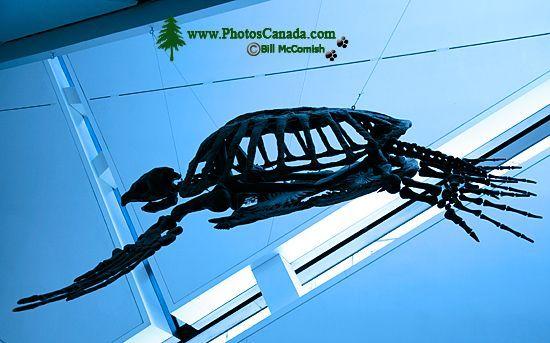 ROM Dinosaur Exhibit, Toronto, Ontario CM11-001