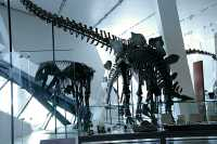 ROM Dinosaur Exhibit, Toronto, Ontario CM11-002