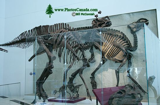 ROM Dinosaur Exhibit, Toronto, Ontario CM11-003