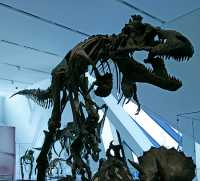 ROM Dinosaur Exhibit, Toronto, Ontario CM11-004