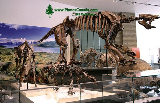 ROM Dinosaur Exhibit, Toronto, Ontario CM11-005
