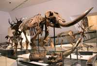 ROM Dinosaur Exhibit, Toronto, Ontario CM11-006