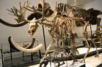 ROM Dinosaur Exhibit, Toronto, Ontario CM11-007