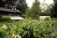 "Rose Harbour, Susan""s Amazing Garden,  Gwaii Haanas National Park Reserve, Haida Gwaii, British Columbia, Canada CM11-06"