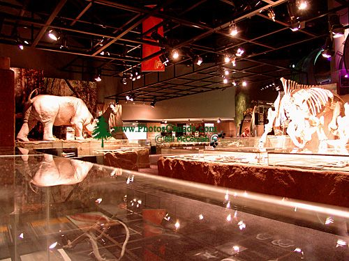 Royal Tyrrell Museum, Drumheller, Alberta, Canada 15