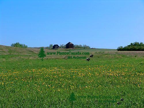 Prairie Farm 18