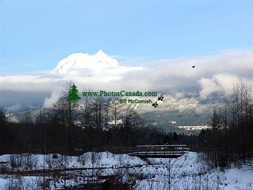 Squamish Estuary, British Columbia, Canada  04