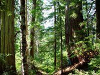 Elaho Valley, British Columbia, Canada  17