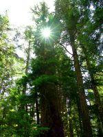 Squamish Valley, Ancient Rainforest, British Columbia, Canada   19