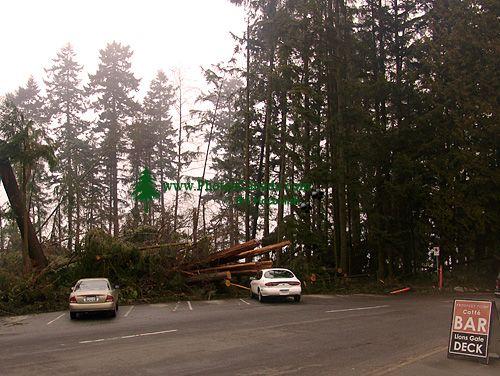 Stanley Park 2007 Wind Storm Damage 05