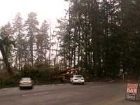 Stanley Park 2007 Wind Storm Damage 05