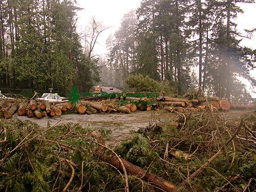 Stanley Park 2007 Wind Storm Damage 07