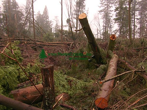 Stanley Park 2007 Wind Storm Damage 09