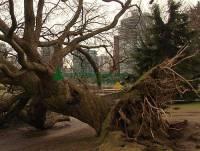 Highlight for Album: Stanley Park 2006-2007 Winter Storm Damage Photos