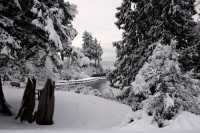 Stanley Park, Winter 2008, Vancouver, British Columbia, Canada CM11-08