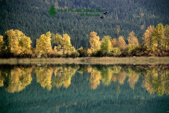 Steeples Mountain Range, Cranbrook Region, British Columbia, Canada CM11-007