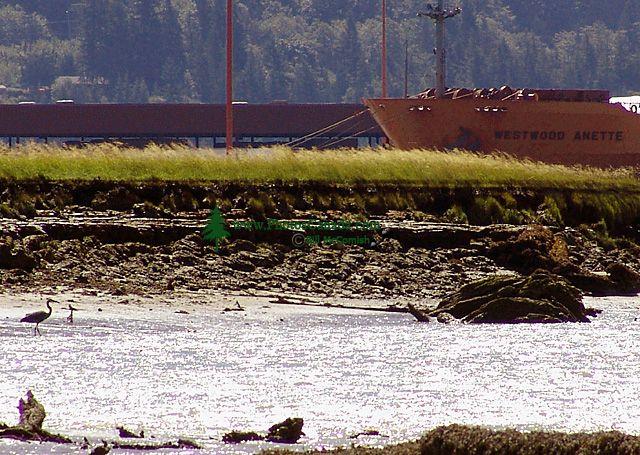 Squamish-Oil-Spill-Aftermat.jpg