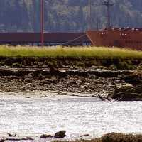 Squamish-Oil-Spill-Aftermat.jpg