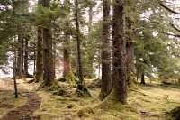 Bill Reid Burial Site, Tanu, T'aanuu Lnagaay, Sitka Spruce, Haida Heritage Site, Gwaii Haanas National Park,   British Columbia, Canada CM11-14