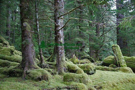 Tanu, T'aanuu Lnagaay, Haida Heritage Site, Gwaii Haanas National Park,   British Columbia, Canada CM11-09