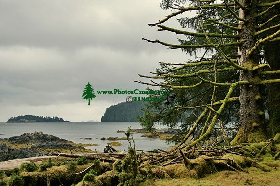 Tanu, T'aanuu Lnagaay, Laskeek Bay, Haida Heritage Site, Gwaii Haanas National Park,   British Columbia, Canada CM11-04