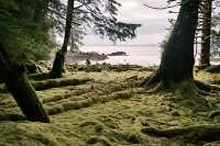 Tanu, T'aanuu Lnagaay, Laskeek Bay, Haida Heritage Site, Gwaii Haanas National Park,   British Columbia, Canada CM11-05