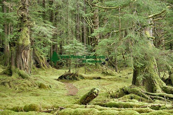 Tanu, T'aanuu Lnagaay, Haida Heritage Site, Gwaii Haanas National Park,   British Columbia, Canada CM11-08