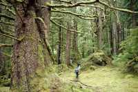 Tanu, T'aanuu Lnagaay, Haida Heritage Site, Gwaii Haanas National Park,   British Columbia, Canada CM11-07