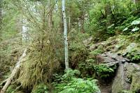 Highlight for Album: Thorsen Creek Petroglyphs, Bella Coola, British Columbia Stock Photos