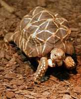 Turtle, Toronto Zoo, Ontario, Canada CM11-040