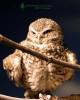 Highlight for Album: Toronto Metro Zoo, Birds,  May 2010, Province of Ontario, Canada