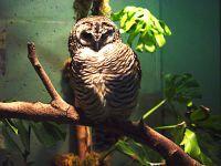 Owl, Toronto Zoo, Ontario, Canada 05