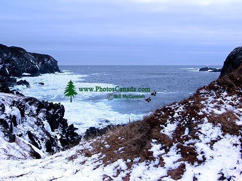 Twillingate, Atlantic Coast, Newfoundland, Canada 08