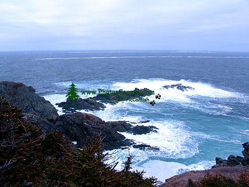 Twillingate, Atlantic Coast, Newfoundland, Canada 06