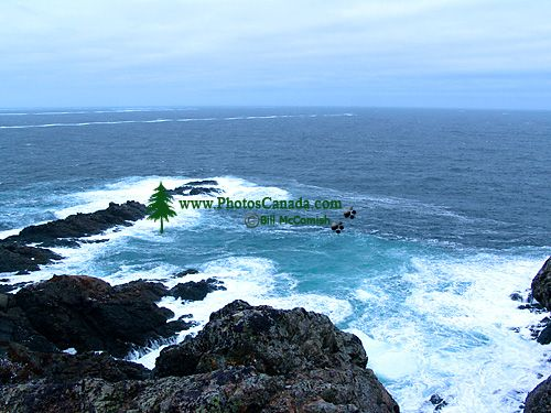 Twillingate, Atlantic Coast, Newfoundland, Canada 03