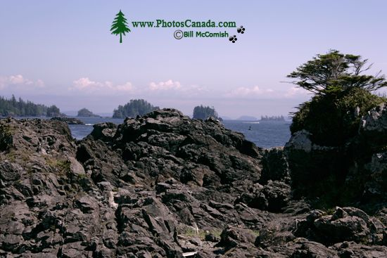 Wild Pacific Trail, Ucluelet, Vancouver Island CM11-002
