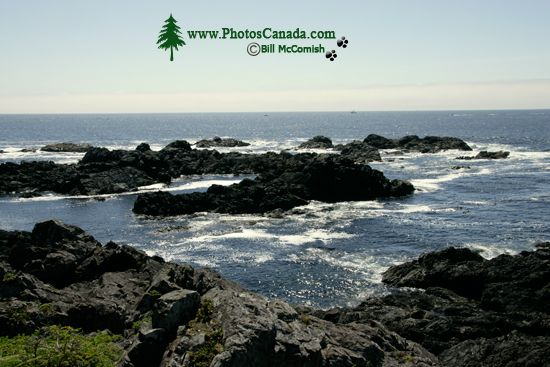 Wild Pacific Trail, Ucluelet, Vancouver Island CM11-003