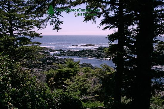 Wild Pacific Trail, Ucluelet, Vancouver Island CM11-005