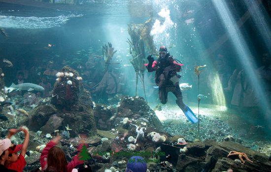 Vancouver Aquarium 2009, Stanley Park, Vancouver, British Columbia CM11-01