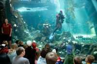 Vancouver Aquarium 2009, Stanley Park, Vancouver, British Columbia CM11-02