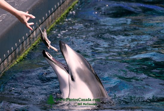 Vancouver Aquarium 2009, Stanley Park, Vancouver, British Columbia CM11-03