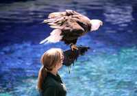Vancouver Aquarium 2009, Stanley Park, Vancouver, British Columbia CM11-07