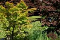 Vandusen Gardens, Vancouver, British Columbia CM11-01