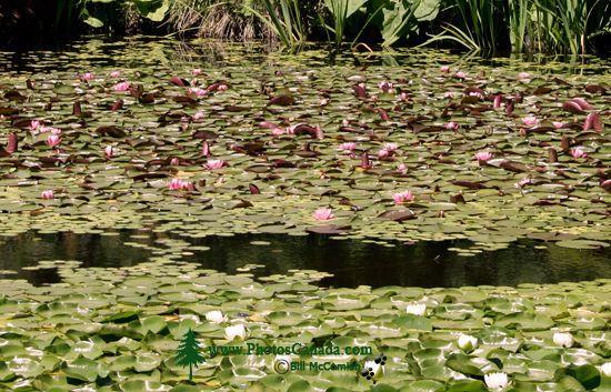 Vandusen Gardens, Vancouver, British Columbia CM11-04