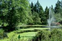 Highlight for Album: Vandusen Gardens Photos, 2009, Vancouver, British Columbia Stock Photos